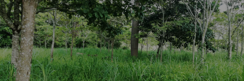 Trees on Farms aligns the biodiversity conservation  and agriculture agendas